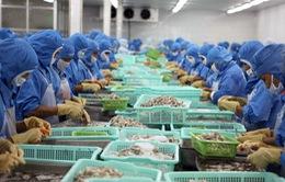 Quý I/2017, Nhật Bản dẫn đầu nhập khẩu tôm Việt Nam