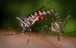 New York cảnh báo về virus Zika trong mùa du lịch