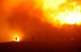 Chile thiệt hại nặng nề do nạn cháy rừng tồi tệ nhất lịch sử