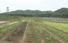 Lần đầu tiên nông sản của người H'Rê có trong siêu thị