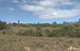 Gia Lai: Thu hồi đất rừng bị lấn chiếm để trồng rừng