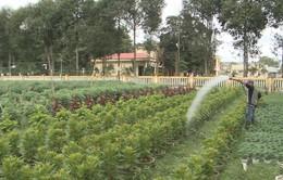 Thừa Thiên - Huế khôi phục vùng trồng hoa tết