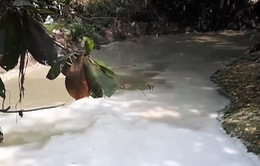 TP.HCM bắt quả tang doanh nghiệp giấy xả thải gây ô nhiễm môi trường