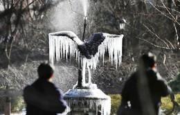 Thời tiết Tokyo, Nhật Bản đang lạnh nhất trong 48 năm qua