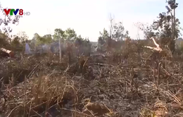 Chính quyền tỉnh Đắk Nông bất lực trước nạn lấn chiếm đất rừng ?