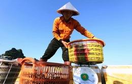 Tháng 1, xuất khẩu nông lâm thủy sản đạt trên 3 tỷ USD