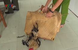 Cà Mau: Xóa trường gà ở cửa biển