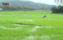 Phú Yên tháo gỡ nút thắt để phụ nữ tiếp cận nguồn vốn