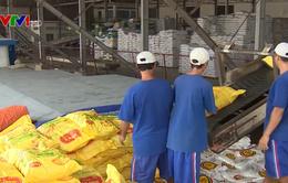 Xuất khẩu gạo Việt Nam đạt mức cao nhất trong 3 năm