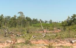 Khó khăn trong bảo vệ rừng tại các dự án lâm nghiệp