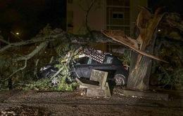 Hàng trăm nghìn người ở Bồ Đào Nha rơi vào cảnh mất điện do bão Leslie