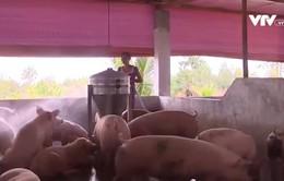 """Giá thịt lợn ở miền Bắc giảm """"nhỏ giọt"""""""