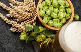 Thành phần trong hoa bia có tác dụng chữa bệnh