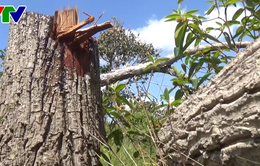 Chuyển hồ sơ vụ phá rừng Tà Cú sang cơ quan công an