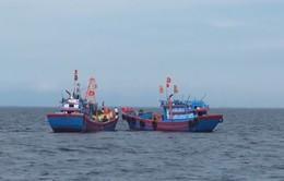"""""""Nóng"""" tình trạng khai thác tận diệt vùng biển Bắc Trung Bộ"""