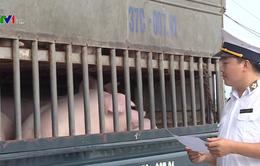 Hà Tĩnh ban hành công điện phòng chống bệnh dịch tả lợn