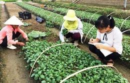 Khánh Hòa: Thí điểm đưa lao động trẻ về Hợp tác xã