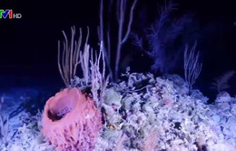 Các nhà khoa học sẽ thám hiểm đáy 5 đại dương