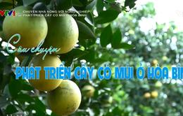 Chuyện nhà nông với nông nghiệp: Phát triển cây có múi ở Hòa Bình