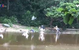 Tới Campuchia, thăm khu bảo tồn động vật hoang dã Phnom Tamao