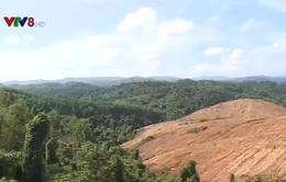 Quảng Trị: Kiểm tra hoạt động lấn chiếm rừng