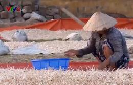 Tỏi Lý Sơn rớt giá, nông dân thiệt hại vì tích trữ