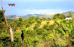 Gia Lai: Thanh tra toàn diện các ban quản lý rừng phòng hộ