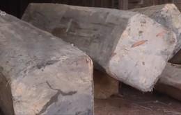 Phát hiện xưởng gỗ lậu quy mô lớn tại Đăk Lăk