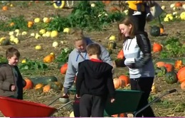 Người dân Anh nô nức đi mua bí ngô tại vườn chuẩn bị cho Halloween