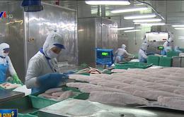 Bộ Nông nghiệp yêu cầu giám sát chặt nuôi cá tra