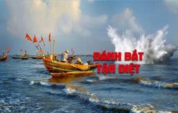 """[Tiêu điểm]: Đánh bắt hải sản theo lối """"tận diệt"""" - Khó xử lý triệt để"""