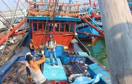 Bình Định: Đề nghị công an điều tra tình trạng bảo kê tại cảng cá Qui Nhơn