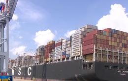 Giá dịch vụ xếp dỡ container tại cảng biển của Việt Nam còn thấp
