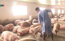 Nguồn cung thịt lợn vẫn ổn định