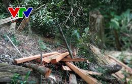 Đình chỉ công tác 2 Trạm trưởng liên quan vụ phá rừng ở Thừa Thiên Huế