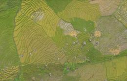 """Bước chân khám phá: """"Ngọc Linh - Tây Bắc thu nhỏ giữa đại ngàn Tây Nguyên"""" (20h55 thứ Sáu 05/10, VTV8)"""