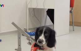 Sử dụng chó phát hiện mùi ký sinh trùng sốt rét