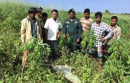 Phát hiện những vật thể lạ nghi UFO tại Campuchia