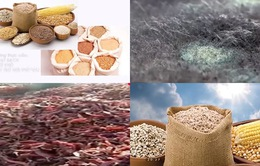 Đây là chất độc gây ung thư có trong ớt bột, thực phẩm nấm mốc