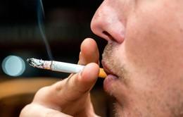 Đường tồn tại cả trong thuốc lá