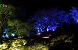 Khu vườn kỳ ảo ở Nhật Bản