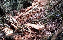 Phó Thủ tướng yêu cầu kiểm tra, ngăn chặn phá rừng tại Lâm Đồng