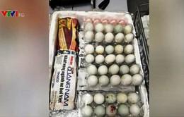 Mang trứng vịt lộn vào Singapore, một người Việt bị phạt 5.000 USD