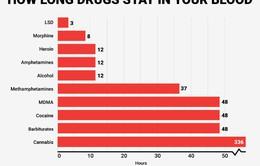 Bạn có biết: Các chất gây nghiện sẽ ở lại trong cơ thể bao lâu?