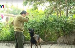 Chó nhà cũng cần được huấn luyện để đảm bảo an toàn cho trẻ