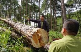 Yêu cầu Chủ tịch UBND Lâm Đồng kiểm tra, làm rõ các vụ phá rừng trên địa bàn