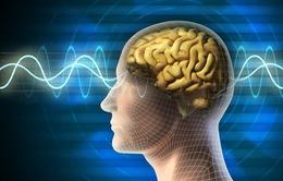Môi trường có thể thay đổi chỉ số IQ ở cấp độ di truyền