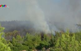 Khống chế thành công cháy rừng tại Bồ Đào Nha