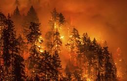 Ít nhất 9 người thiệt mạng do cháy rừng ở California, Mỹ