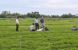 Máy thu hoạch rau má bằng động cơ xăng